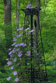 Purple Clematis & Trellis