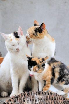 .3 beautiful cats ()()