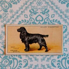Vintage Cocker Spaniel Cigarette Card by JabberwockyLetters, $2.00
