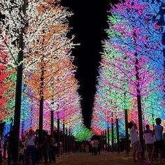 Wow. I'm speechless. This looks like something out of a fairy tale......(Or the North Pole!)