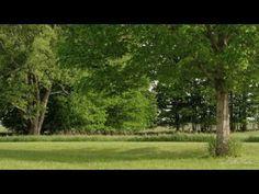 Krásná Keltská hudba Relaxační s Natural Sounds odpočinek, spánek, lázní, meditace - YouTube
