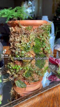 Planting Succulents, Garden Plants, Indoor Plants, Garden Terrarium, Inside Plants, Cool Plants, Plant Projects, Garden Projects, House Plants Decor