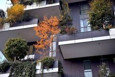 THE VERTICAL FOREST IN MILAN BECOMES A FOREST IN CHINA - NEWSPAPER POP -