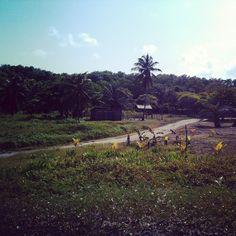A la découverte du Honduras (Partie 2)   Mosaique De Vero