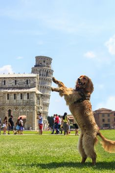 The Leaning Tower of Pisa is a hugely popular tourist site; people love taking forced perspective photos. See funny Leaning Tower of Pisa pictures here. Funny Animal Pictures, Cute Funny Animals, Funny Dogs, Funny Memes, Random Pictures, That's Hilarious, Funniest Memes, Creative Pictures, Fun Funny