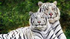 di Tutto Un Po' Italia: Crimini ambientali, animali a rischio estinzione