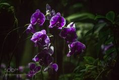 http://ift.tt/2jr6Zkd #Nature_breathtaking #Photos Wild Orchids in deep jungle at Bronx Zoo by Toshihiro_Shoji