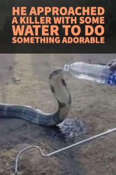 #animal #rescue #snake #viral #videos #saving #animals #cobra