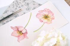 Watercolor illustration - hellebores. Logo and identity design for Angelworx on Behance by Kateryna Savchenko