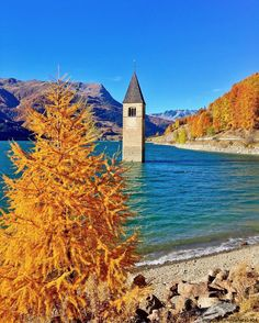 The lonely church tower emerges from the Reschensee surrounded by South Tyrol #Autumn colours #FoliageinItaly #Italia #Italy #ilikeitaly #autunno #foliage #leaves #AltoAdige #LagodiResia #Curon #LakeResia #Reschensee