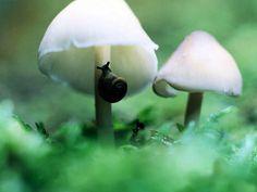 Tiny snail under tiny white mushrooms.