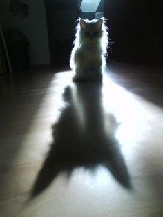 shadow Cute Cats And Dogs, Cool Pets, Cats And Kittens, Shadow Art, Shadow Play, Long Shadow, Crazy Cat Lady, Crazy Cats, Ombres Portées