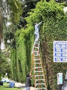 Funny health and safety pictures. Ladders can be dangerous. Electrical safety pictures - Lightning nearly strikes man. Safety Pictures, Safety Fail, Safety Rules, Darwin Awards, Safety First, Workplace Safety, Stupid People, Stupid Things, Stupid Stuff