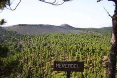 Volcanic caldera with vibrant green Canarian pines #ElHierro