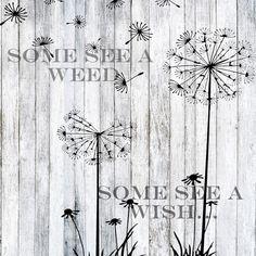 Dandelion Wishes x Poster - art artwork picture diy unique Minions, Art Nouveau, Art Simple, Dandelion Wish, Dandelion Quotes, Dandelion Art, Gif Disney, Poster Art, Thinking Quotes