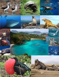 Region - Galapagos Island -  www.aquiecuadortravel.ec