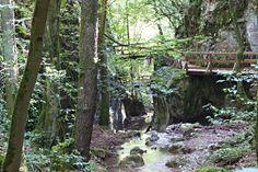 Hagenbachklamm bei St. Andrä-Wördern Caves, Plants, Communities Unit, Landscape, Cave, Blanket Forts, Planters, Plant, Planting