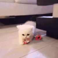 When you don't want to share your toy... #kittenproblems