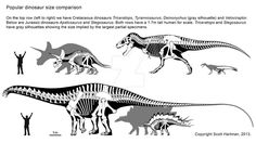 Comparacion de tamaño en algunos dinosaurios  Por: ScottHartman en Deviantart
