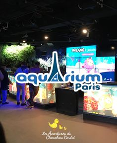 Molang à l'Aquarium de Paris Broadway Shows, Blog, Save Animals, Travel, Blogging