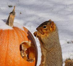 Recycling Pumpkins for Birds and Wildlife Deer Feeders, Diy Bird Feeder, Pumpkin Vine, Diy Garden Projects, Chickens Backyard, Wild Birds, Bird Feathers, Halloween Pumpkins, Squirrel
