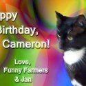 Happy Caturday Birthday!  #cats