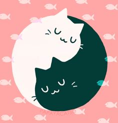 cat yin yang - Google Search