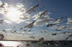 El Gobierno destaca el funcionamiento de los sistemas de control contra la influenza aviar