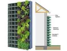 Growing wall inside one's home-helps purify the air. People put them in their kitchens for herb gardens too.