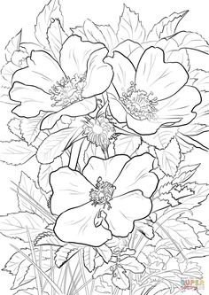 Wild Prairie Rose coloring page from Flowers category. Select from 27734 printable crafts of cartoons, nature, animals, Bible and many more.