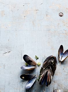 mussels shells mood food photography by Wout Hendrickx
