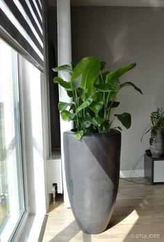 Balcony Garden, Indoor Garden, Indoor Plants, Green Plants, Growing Plants, Vases Decor, Interior Design Living Room, House Plants, Greenery