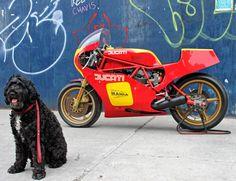 Ducati 1982 TT2 Pantah - Just (40) bikes produced created 4 championships.  #ducatitt2 #tt2 #pantah #racer @ducati nydesmo.com