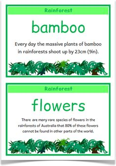 Rainforest Fact Cards - Treetop Displays - A set of 18 fact cards that give… Rainforest Facts, Rainforest Flowers, Rainforest Activities, Rainforest Project, Rainforest Habitat, Rainforest Theme, Amazon Rainforest, Science Activities, Rainforest Classroom