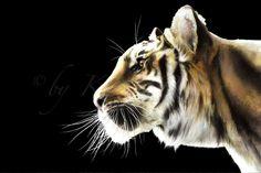 """Ready For Dinner?"" · Tiger Drawing by Karin Russer · Technique: Aquarell and Ink · Please visit my Gallery: www.grafikundmehr.de/fineart  #art #fineart #painting #arttovisit #gallery #painter #artist #artalive #lifeofanartist #supportart #artbeat #modernart #contemporaryart #watercolor #drawing #illustration #animal #animals #pets #animalart #animalportrait #portrait #cat #cats #wildcat #tiger"