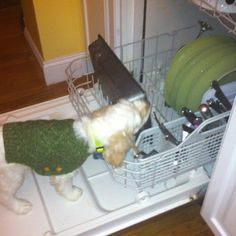 Sully the wonder pup does the dishes !