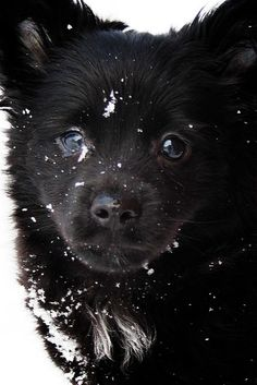 Adorable! Hope it snows this year so I can get some pics of Chi Chi in the snow!