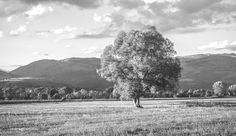CATALONIA, Oak  #CATALONIA #OAK #PUIGCERDÀ