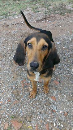 ¡ADOPTADO! DODO  - Macho - Nacido en 2013 - 15 kg. - Llegó en agosto de 2014, mucha energía y mucha ganas de jugar, es super simpático con las personas y con los perros.