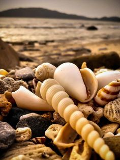 Plage de coquillages / Shell's beach.
