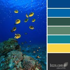 wild life color schemes - Google Search