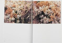 In Our Nature by Takashi Homma 5
