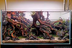 Image result for tree root aquascape