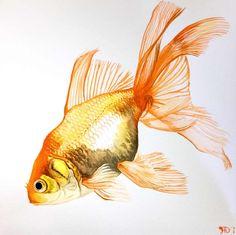 Goldfish Fancy Fins Watercolor by goldfish-account.deviantart.com on @deviantART
