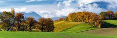 Collines et champs d'Avully - Les colinnes, les champs et les vignes de la campagne d'Avully dans le canton de Genève à l'automne montrent leurs plus belles couleurs. Canton, Champs, Golf Courses, Pictures, Grape Vines, Rural Area, Colors, Fall, Photos