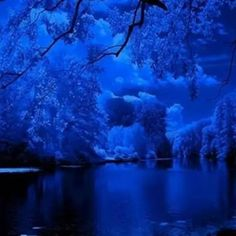 Beautiful blue of nature Best Wallpapers Blue Dream, Love Blue, Color Blue, Image Bleu, Everything Is Blue, Blue Garden, Himmelblau, Blue Christmas, Merry Christmas
