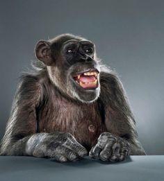 monkey portrait - jill greenberg (17)