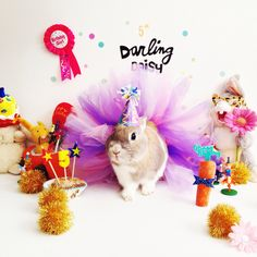 Last week our little Daisy bunny turned 5 years old. We threw her a Bunny Party, complete with a custom made tutu, tiny birthday hat, party carrot (look at her go crazy for it in that 3rd photo) an...