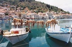 Gythio (Yithio) means Land of the Gods. Capital of Mani, Laconia, Greece, built on the sides of Mt. Koumaros. Formerly port of Sparta;the Phoenicians manufactured the purple dye from the Murex shellfish found here, and Xenophon reported that the Spartan fleet was based here♥