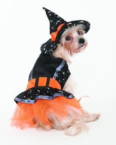 Fashion Pet Halloween Witch Costume for Dogs, Medium ** See this great image (This is an affiliate link and I receive a commission for the sales) : Dog costumes